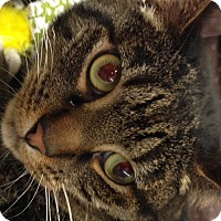 Adopt A Pet :: Jerri - Redondo Beach, CA