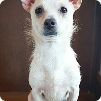 Terrier (Unknown Type, Small) Mix Dog for adoption in Fredericksburg, Texas - Peanut