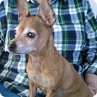 Adopt A Pet :: MAMA - Hurricane, UT