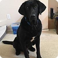 Adopt A Pet :: Oso - Austin, TX