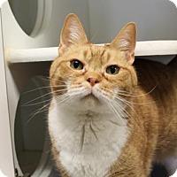 Adopt A Pet :: Marmalade - Brunswick, GA