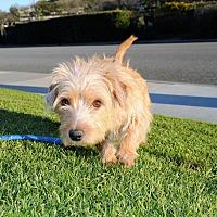 Adopt A Pet :: Muffin - Agoura Hills, CA
