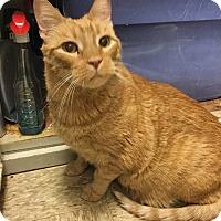 Adopt A Pet :: Quinn - Colmar, PA