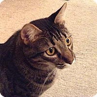 Adopt A Pet :: Ziggy - Tiburon, CA