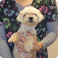 Adopt A Pet :: Sally - Wildomar, CA