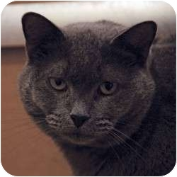 Domestic Shorthair Cat for adoption in St. Clements, Ontario - Farrah