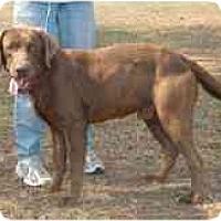 Adopt A Pet :: Max A - Cumming, GA