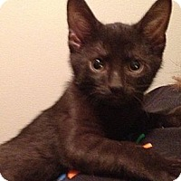 Adopt A Pet :: Black Jack - Troy, OH