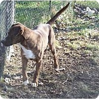 Adopt A Pet :: Penny ADOPTION PENDING! - Antioch, IL