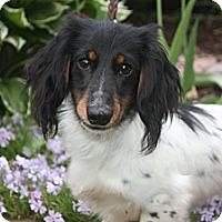 Adopt A Pet :: Sammy - Hastings, NY