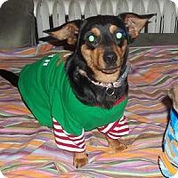 Adopt A Pet :: Lola - Hamilton, ON