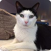 Adopt A Pet :: Max - New York, NY