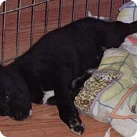 Adopt A Pet :: Aston - Saskatoon, SK