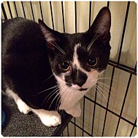 Adopt A Pet :: MOE - Hamilton, NJ