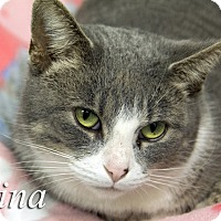 Adopt A Pet :: Tina - Martinsville, IN