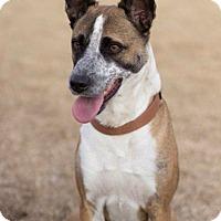 Adopt A Pet :: Duncan (Courtesy Listing) - Scottsdale, AZ