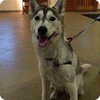 Adopt A Pet :: Maya - Rockaway, NJ