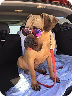 Mastiff Mix Dog for adoption in Killeen, Texas - Ruby