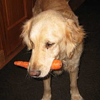 Adopt A Pet :: Atticus - Minnetonka, MN