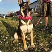 Adopt A Pet :: Sasha - Salt Lake City, UT