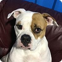Adopt A Pet :: Mama - Conroe, TX