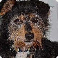 Adopt A Pet :: Elliot - Lodi, CA