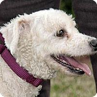 Adopt A Pet :: DD - Houston, TX