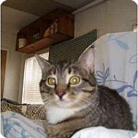 Adopt A Pet :: White Sox - Jenkintown, PA