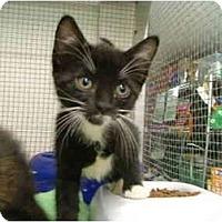 Adopt A Pet :: Libby - Winter Haven, FL