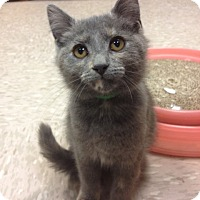 Adopt A Pet :: Bam Bam - Byron Center, MI