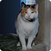 Adopt A Pet :: Karma - Waxhaw, NC
