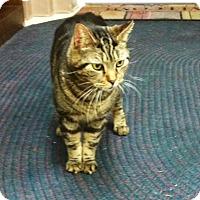 Adopt A Pet :: Biggysmalls - Trevose, PA