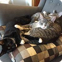 Adopt A Pet :: Pufendorf - Chicago, IL