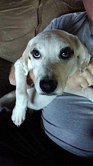 Anatolian Shepherd/Shepherd (Unknown Type) Mix Dog for adoption in Disney, Oklahoma - Ellen