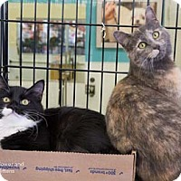 Adopt A Pet :: Flower - Merrifield, VA