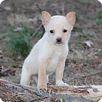 Adopt A Pet :: Heineken - Millersville, MD