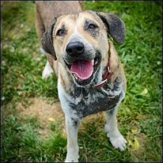Shepherd (Unknown Type) Mix Dog for adoption in Christiana, Tennessee - Naveena
