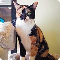 Adopt A Pet :: Ginger - Sherman Oaks, CA