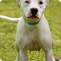 Adopt A Pet :: Pearl - Columbus, GA