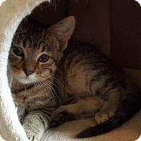 Adopt A Pet :: River - Savoy, IL