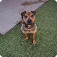 Adopt A Pet :: Quinn - Farmington, NM