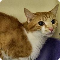 Adopt A Pet :: Louise - Elyria, OH