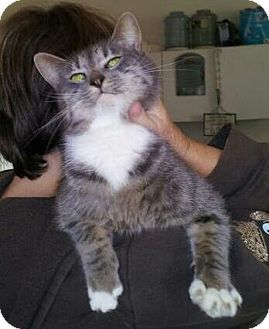 Domestic Mediumhair Cat for adoption in Daleville, Alabama - Misty