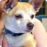 Adopt A Pet :: Pirate - Poulsob, WA