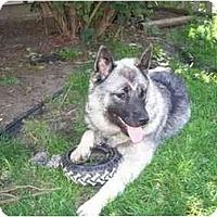 Adopt A Pet :: Oskar - Belleville, MI