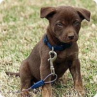 Adopt A Pet :: Logan - Staunton, VA