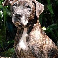 Adopt A Pet :: Nino - Sebastian, FL