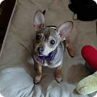 Adopt A Pet :: Jupiter - Salem, OR
