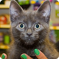 Adopt A Pet :: Bella - Irvine, CA