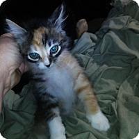 Adopt A Pet :: Darling - Pensacola, FL